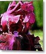 Burgundy Breeze Metal Print