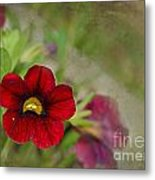 Burgundy Calibrochoa Blank Greeting Card Metal Print