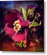 Burgundy Hellebore Flower Metal Print