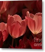 Burgundy Tulips Metal Print
