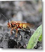 Burn Pile Bee Metal Print