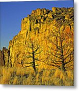 Burned Juniper Metal Print