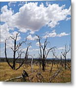 Burned Trees On Colorado Plateau Metal Print