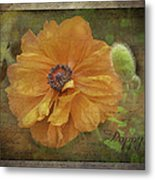 Burnished Poppy Metal Print