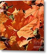 Burnt Orange Metal Print
