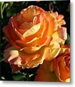 Burnt Rose Metal Print