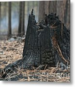 Burnt Tree Trunk Metal Print