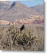 Burro Red Rock Metal Print