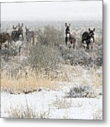 Burros In The Snow Metal Print