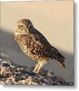 Burrowing Owl II Metal Print