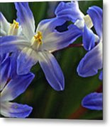 Burst Of Glory Metal Print