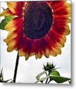 Burst Of Sunflower Metal Print