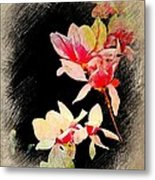 Bursting Magnolias Metal Print