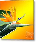 Bursting Out Of The Box Metal Print