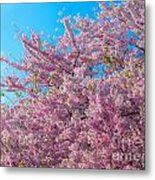 Bursting With Blossoms With A Hint Of Green Metal Print