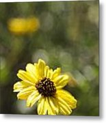 Bush Sunflower 1 Metal Print