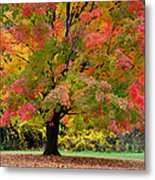 Busse Woods Fall Color Metal Print