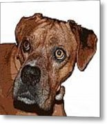 Buster Brown The Boxer Metal Print by Sandra Clark