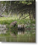 Busy Beaver Metal Print by Charles Warren