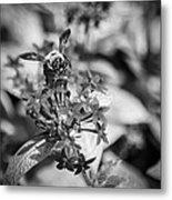 Busy Bee - Bw Metal Print