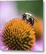 Busy Bee On Cone Flower Metal Print