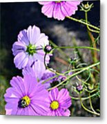 Busy Bees Metal Print by Susan Leggett