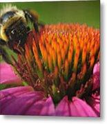 Busy Bumble Bee Metal Print by Luke Moore