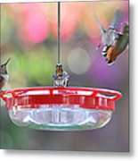 Busy Day At The Feeder Metal Print