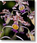Busy Orchids Metal Print