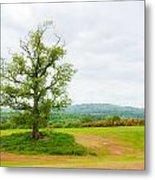 But Only God Can Make A Tree Metal Print by Semmick Photo