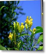 Butter And Egg Wildflower Metal Print
