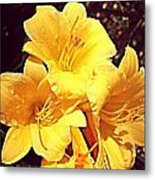 Butter Yellow Lilly Cluster Metal Print