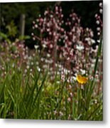 Buttercup And Wildflowers Metal Print