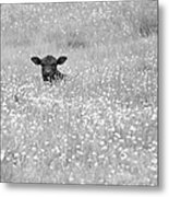 Buttercup In Black-and-white Metal Print by JD Grimes