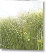 Buttercups Flowers And Sun Flare Metal Print