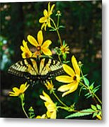 Buttered Up Metal Print