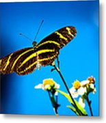Butterflies And Blue Skies Metal Print