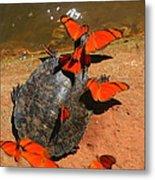 Butterflies And Turtle Metal Print