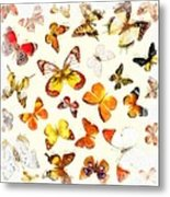 Butterflies Square Metal Print