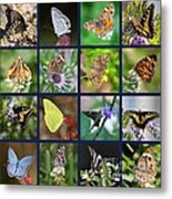 Butterflies Squares Collage Metal Print