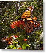 Butterflies Three Metal Print