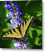 Butterflly Bush And The Swallowtail Metal Print