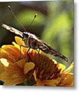 Butterfly 004 Metal Print