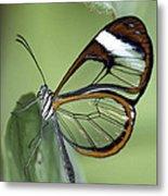 Butterfly 005 Metal Print