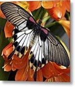 Butterfly 006 Metal Print