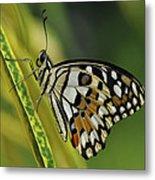 Butterfly 010 Metal Print
