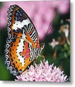Butterfly 012 Metal Print