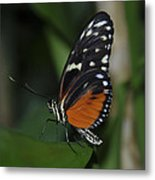Butterfly 025 Metal Print