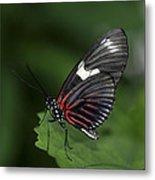 Butterfly 027 Metal Print