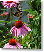 Butterfly 1 2013 Metal Print